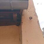 Bienen-im-Dachbalken-3