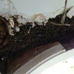 Bienen-in-Hauswand-4