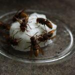 Hornissen-fressen-Zuckerteig