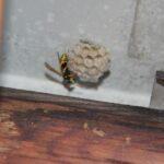 Anfang-Nestbau