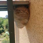 Nest-mittlere-Wespe-3