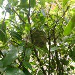 mittlere-Wespen-Nest-im-Busch
