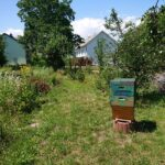 Aue-Sued-Permakultur-Bienenstand-2020-2