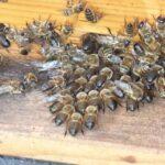 Drohnenschlacht am Home-Hive