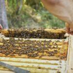 Kontrolle-Einraum-Home-Hive