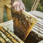 Kontrolle-Einraume-Home-Hive-20-5