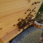 Flugloch-Home-Hive