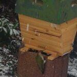 Gruenspecht-bei-Home-Hive
