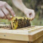 Home-Hive-Bearbeitung