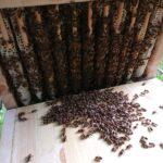 Home-Hive-Hinterklappe-2