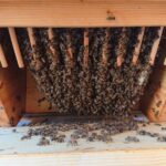 Home-Hive-Hinterklappe-3