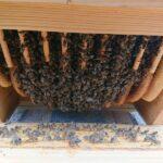 Home-Hive-Hinterklappe-7