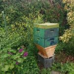 Home-Hive-in-Phillipsburg
