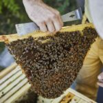 Obertraeger-Home-Hive-10