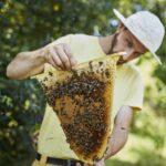 Obertraeger-Home-Hive
