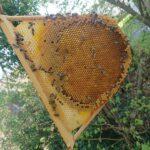 Obertraeger-Home-Hive-4