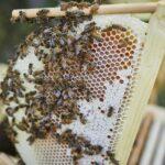 Obertraeger-Home-Hive-Honigwabe-2