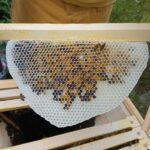 Pollenwabe-Home-Hive-20-2