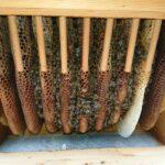 Wintertraube-Home-Hive