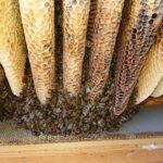 Wintertraube-Home-Hive-2
