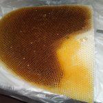 Apis Dorsata Comb (6)