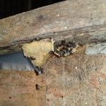 stingless bees (2)