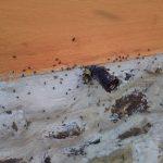 stingless bees (6)