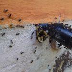 stingless bees (7)