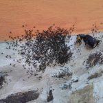 stingless bees (8)