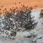 stingless bees (9)